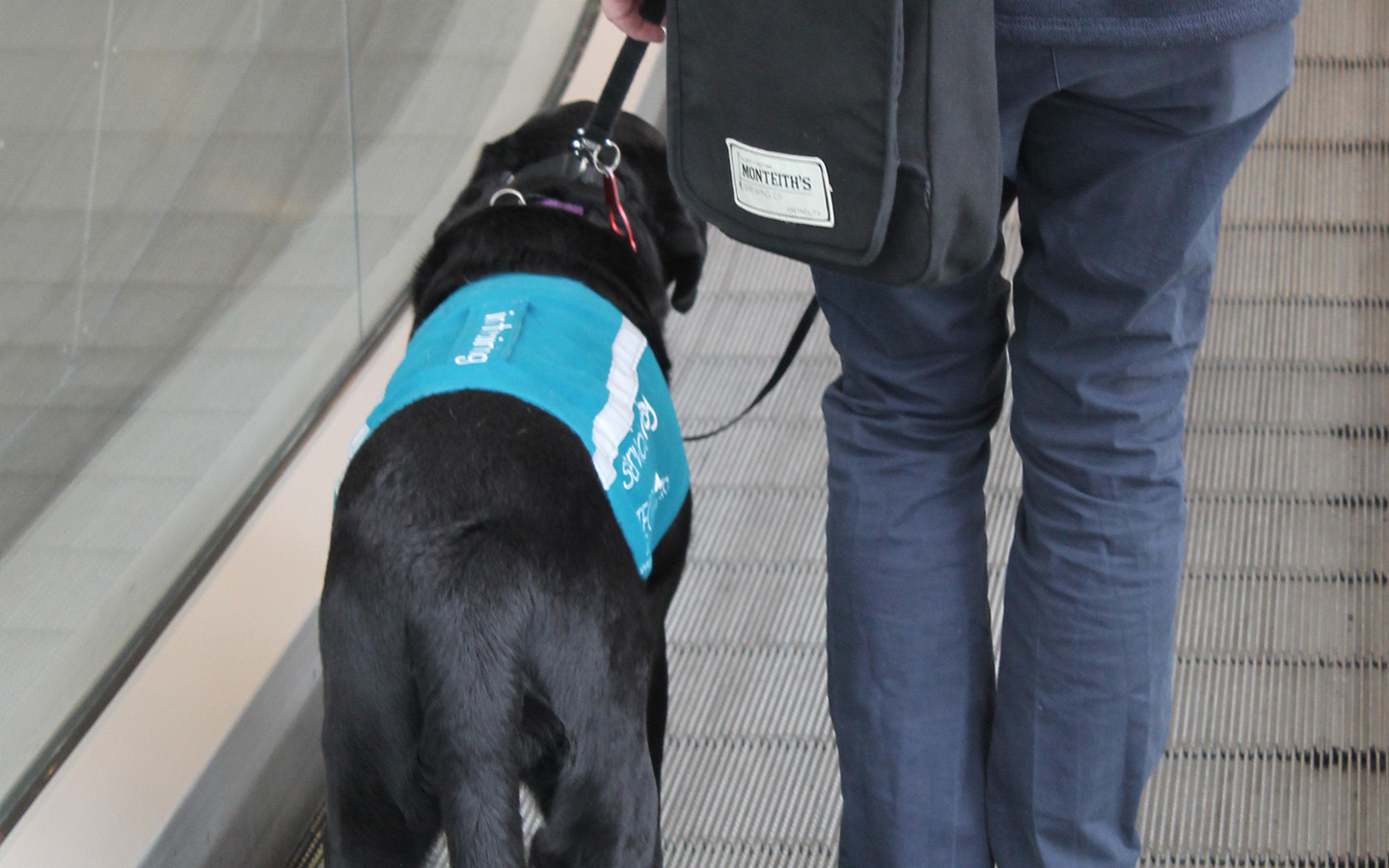 QinetiQ helps unite a veteran and assistance dog through Integra Service Dogs Australia